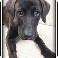 Adopt A Pet :: Phoenix - Pascagoula, MS