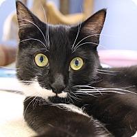Adopt A Pet :: Maris - Chicago, IL