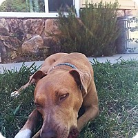 Adopt A Pet :: Taylor - Sacramento, CA