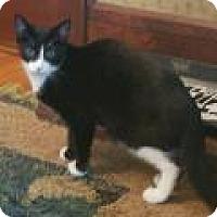 Adopt A Pet :: Sol - East Hanover, NJ