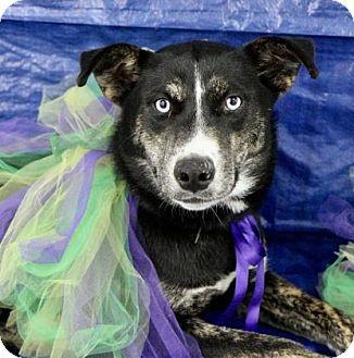 Husky Mix Dog for adoption in Picayune, Mississippi - Sarah