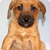 Adopt A Pet :: Scrabble - Waldorf, MD