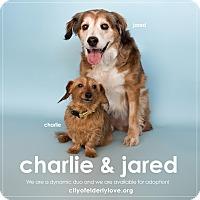 Adopt A Pet :: CHARLIE! - Philadelphia, PA
