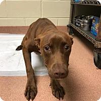 Adopt A Pet :: Abba 6973 - Columbus, GA
