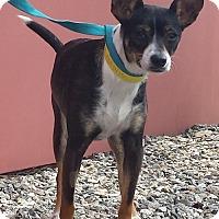 Adopt A Pet :: Sadie - Simi Valley, CA