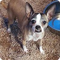 Adopt A Pet :: Clio - Charlotte, NC