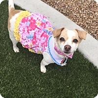 Adopt A Pet :: Nika - Las Vegas, NV
