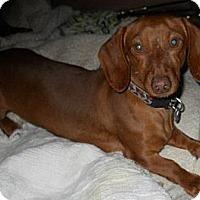 Adopt A Pet :: B.B. - dewey, AZ