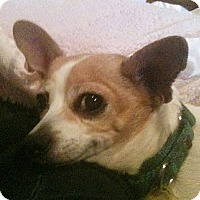 Adopt A Pet :: Minnie - Cleveland, OH