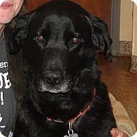 Adopt A Pet :: Lady - Columbus, IN