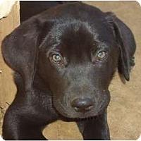 Adopt A Pet :: Leonardo - Arlington, TX