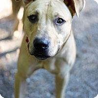 Adopt A Pet :: Aslan - Tinton Falls, NJ
