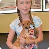 Adopt A Pet :: Caitlyn - Sacramento, CA