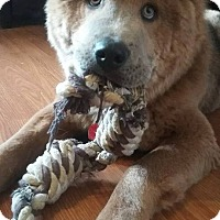 Adopt A Pet :: Ozzie - Tillsonburg, ON