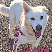 Adopt A Pet :: Gabbie - Carrollton, TX