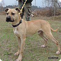 Black Mouth Cur/Labrador Retriever Mix Dog for adoption in Washington, Georgia - Hunter