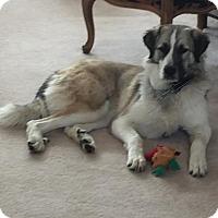 Adopt A Pet :: TEXAS, DALLAS;  'DARBY' - Little, Rock, AR