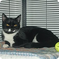 Adopt A Pet :: Catfish - Bradenton, FL