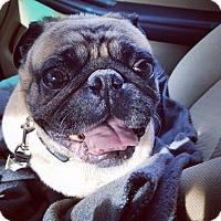 Adopt A Pet :: RUFUS! - Philadelphia, PA