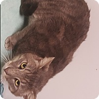 Adopt A Pet :: Winter - Americus, GA