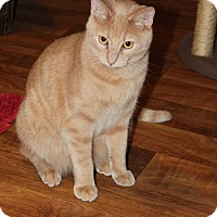 Adopt A Pet :: Casanova-$50 - Naperville, IL