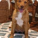 Adopt A Pet :: Binya