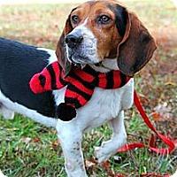 Adopt A Pet :: Jackson - Bridgewater, NJ