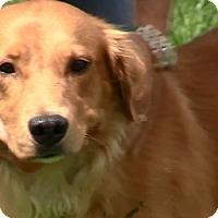 Adopt A Pet :: Graham - New Canaan, CT