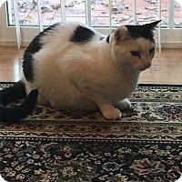 Adopt A Pet :: *SISSY - Winder, GA