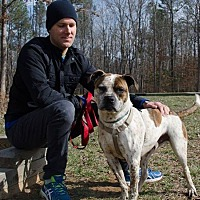 Adopt A Pet :: Fitz - Midlothian, VA