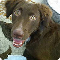 Spaniel (Unknown Type) Mix Dog for adoption in Las Cruces, New Mexico - Tumbler