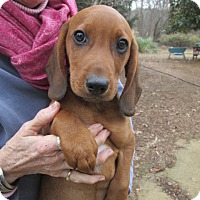 Adopt A Pet :: CLEM - Lincolndale, NY