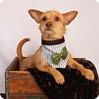Adopt A Pet :: Raising Cain - Carrollton, TX