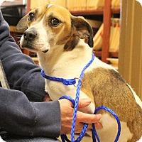 Adopt A Pet :: Edwin - Glastonbury, CT