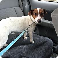 Adopt A Pet :: ROSCOE - Cliffside Park, NJ