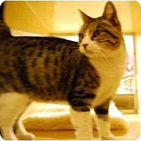 Adopt A Pet :: Seraphina - Modesto, CA