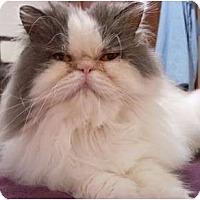 Adopt A Pet :: Molly - Columbus, OH