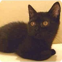 Adopt A Pet :: Nate - Beverly Hills, CA