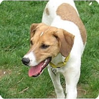 Adopt A Pet :: Lola - Adopted! - Blairstown, NJ