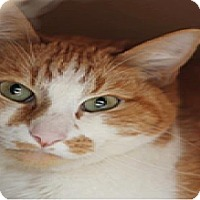 Adopt A Pet :: Sawyer - El Cajon, CA