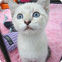 Adopt A Pet :: Cassie - Long Beach, CA