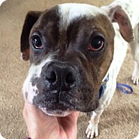 Adopt A Pet :: Joey-Adopted! - Turnersville, NJ