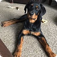 Adopt A Pet :: Forrest - Rochester/Buffalo, NY