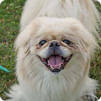 Adopt A Pet :: Elsa - Virginia Beach, VA