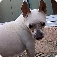 Adopt A Pet :: Al - Las Vegas, NV