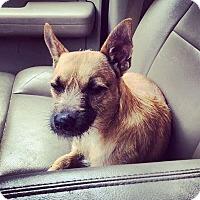 Adopt A Pet :: Raj Emmett - Austin, TX