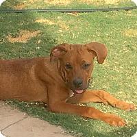 Adopt A Pet :: Colleen - Alpharetta, GA