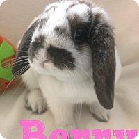 Adopt A Pet :: Berry - Paramount, CA