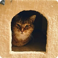 Domestic Shorthair Cat for adoption in Manchester, New Hampshire - Cheerio-What a good boy I am!