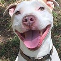Adopt A Pet :: Charlie - Lompoc, CA